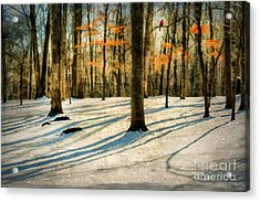 A Touch Of Autumn Acrylic Print by Darren Fisher
