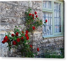 A Touch Of Colour Acrylic Print by Anne Gordon
