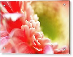 Acrylic Print featuring the photograph A Touch Of Daisy by Kathy Ponce