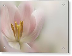 Acrylic Print featuring the photograph A Touch Of Pink by Annie Snel