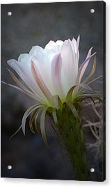 Acrylic Print featuring the photograph A Touch Of Sun by Cindy McDaniel