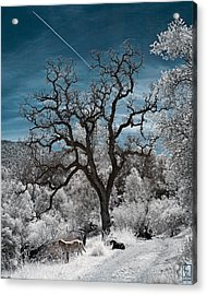 A Trail Not Taken Acrylic Print