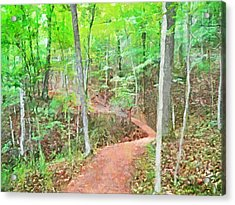 A Trail Through The Woods Acrylic Print