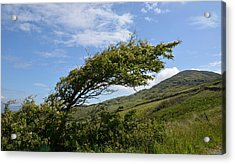 A Tree Bent By The Wind Acrylic Print