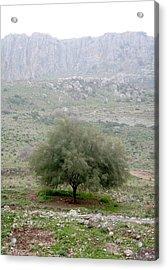 A Tree In Israel Acrylic Print
