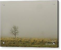 A Tree In Sunrise Fog Acrylic Print by Cindy Bryant