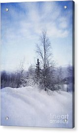 A Tree In The Cold Acrylic Print by Priska Wettstein