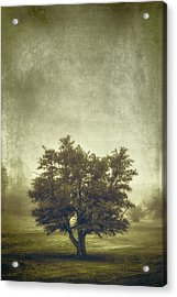 A Tree In The Fog 2 Acrylic Print by Scott Norris