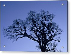 A Tree Is An Object Of Beauty X Acrylic Print
