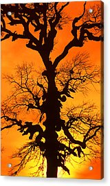 A Tree Is An Object Of Beauty Xii Acrylic Print by Bijan Pirnia