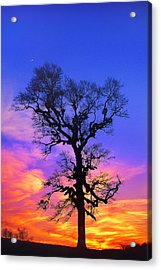 A Tree Is An Object Of Beauty Xiv Acrylic Print by Bijan Pirnia