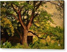 A Tree Acrylic Print by Jenny Rainbow