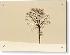 A Tree On A Hill In A Snow Storm Acrylic Print
