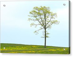 A Tree On A Hill Of Wildflowers Acrylic Print