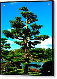 A Tree... Acrylic Print by Tim Fillingim