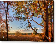 A Trees View Of Autumn On The Marsh Acrylic Print
