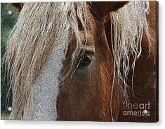 A Trusted Friend Acrylic Print by Yvonne Wright