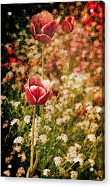 A Tulip's Daydream Acrylic Print by Loriental Photography