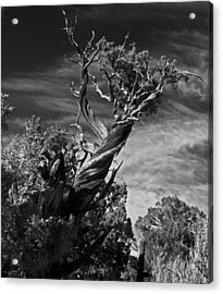 A Twisted Life  Acrylic Print by Eric Rundle