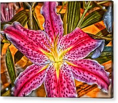 A Vibrant Lily For Your Decor Acrylic Print by Thomas Woolworth