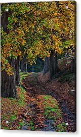 A View Up The Path Acrylic Print by Jeff Folger