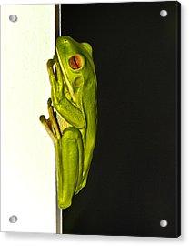 A Visit From A Giant Tree Frog Acrylic Print by Debbie Cundy