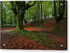 A Walk In The Forest Acrylic Print by Marilar Irastorza