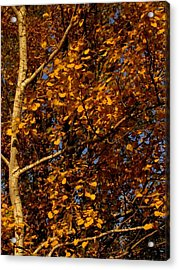 A Walk In The Park - Birch Acrylic Print