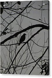 A Walk In The Park - Bird Acrylic Print