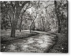 Acrylic Print featuring the photograph A Walk In The Park by Darryl Dalton