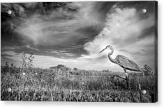 A Walk On The Wild Side Acrylic Print by Mark Andrew Thomas