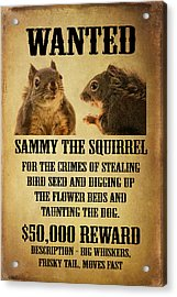 A Wanted Squirrel Acrylic Print