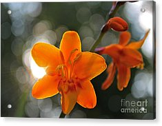 A Warm Thought Acrylic Print