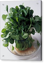 A Watercress Plant In A Bowl Of Water Acrylic Print by Romulo Yanes