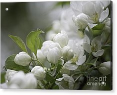 A Whisper Of Spring Acrylic Print