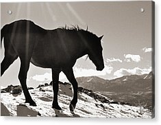 A Wild Horse In The Mountains Acrylic Print by Lula Adams