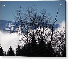 A Winter Day Reaching For The Sky Acrylic Print