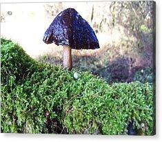 A Winter Mushroom Acrylic Print