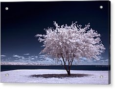 A Winter Summer Acrylic Print