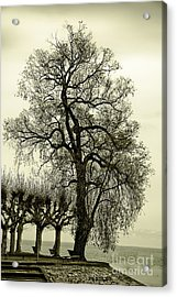 A Winter Touch Acrylic Print by Syed Aqueel