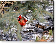 A Winter's Day Acrylic Print by Jay Nodianos