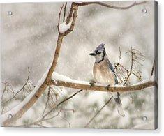 A Winter's Day Acrylic Print by Lori Deiter