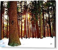 A Winters Day   Acrylic Print by Rick Todaro