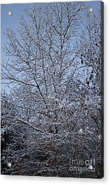 A Winter's Day Acrylic Print