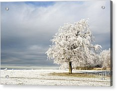 A Winter's Morning Acrylic Print by Anne Gilbert