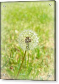 A Wish Acrylic Print by Lorraine Heath