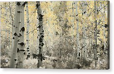 A Wisp Of Gold Acrylic Print by Don Schwartz