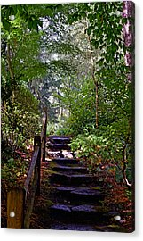 A Wooded Path Acrylic Print by Anthony Baatz