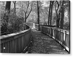 A Wooded Path Acrylic Print