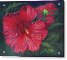 Abby Rose's Mallow Acrylic Print by Harriett Masterson